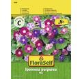 """FloraSelf seminte de flori mix de zorele """"Ipomoea purpurea"""""""