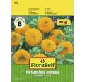 FloraSelf seminte de floarea soarelui pitica batuta