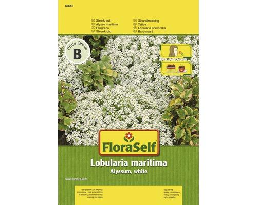 """FloraSelf seminte de flori barbisoara alba """"Lobularia maritima"""""""