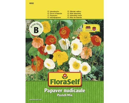 """FloraSelf seminte de mac Islanda pastel-mix """"Papaver nudicaule"""""""