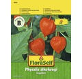 "FloraSelf seminte de floare-lampion ""Physalis alkekengi"""