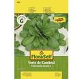 """FloraSelf seminte de salata fetica """"Verte de Cambrai"""""""