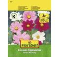 """FloraSelf seminte de flori mix """"Cosmos Sonata"""""""