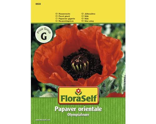 """FloraSelf seminte de mac Foc olimpic """"Papaver"""""""