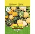 """FloraSelf seminte de dovleac decorativ """"Cucurbita pepo"""""""