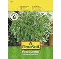 "FloraSelf seminte de busuioc ""Zitronen-Sweet"""