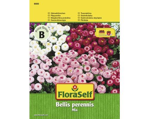 """FloraSelf semințe de părăluțe """"Bellis perennis"""""""