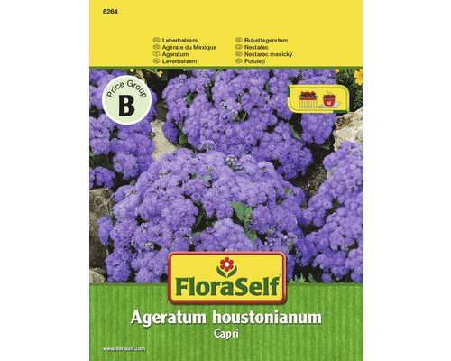 """FloraSelf seminte de plante """"Ageratum houstonianum"""""""