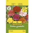 """FloraSelf seminte de garoafe de gradina """"Dianthus caryophyllus"""""""