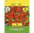 """FloraSelf seminte de conduras """"Tip Top Scarlet"""""""