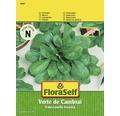 """FloraSelf banda cu seminte de salata de camp """"Verde de Cambrai"""""""