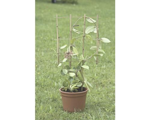 Suport pentru plante FloraSelf® 36 x H 77 cm, maro