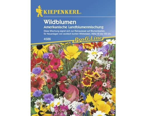 Seminte pentru flori, amestec de flori de camp