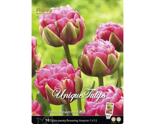 Bulb lalea 'Aveyron' roz, 10 buc