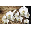 Fototapet vlies Orhidee 416x254 cm