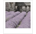 Vopsea lavabila premium StyleColor SELECTION nuanta 17 Floare din Provence 2,5 l