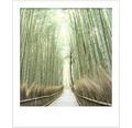 Vopsea lavabila premium StyleColor SELECTION nuanta 03 Forta bambusului 2,5 l